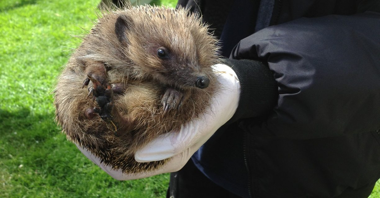 THE CHILTERN CHATTER VERDICT: TIGGYWINKLES WILDLIFE HOSPITAL