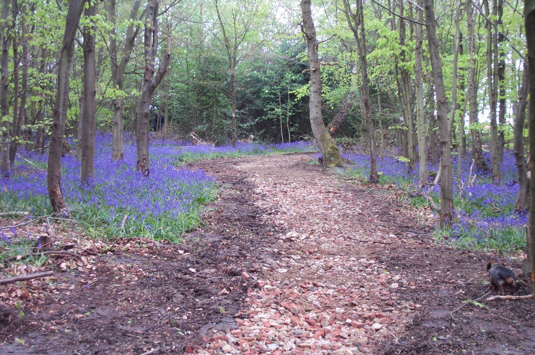 Hodgemoor