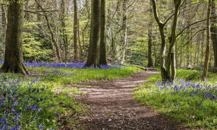 BEST PLACES TO SEE BLUEBELLS