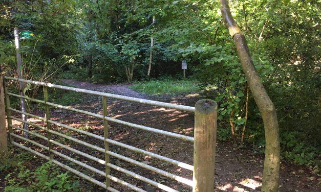 Woodland Adventures around Beaconsfield