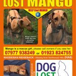 Mango lost poster