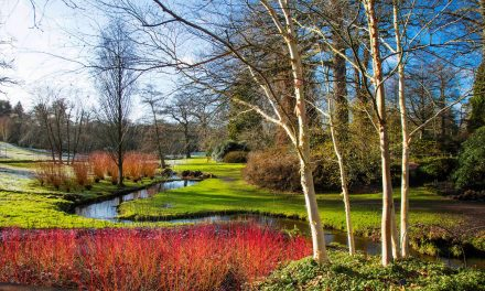 FREE ENTRY TO SAVILL GARDEN THIS JANUARY & FEBRUARY