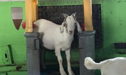 REVIEW: The Bucks Goats Centre