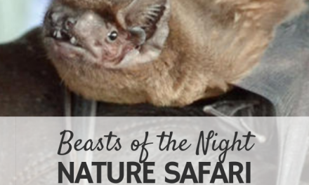 'Beasts of the Night' Family Nature Safari