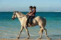 The Residence - Kids Horse Riding