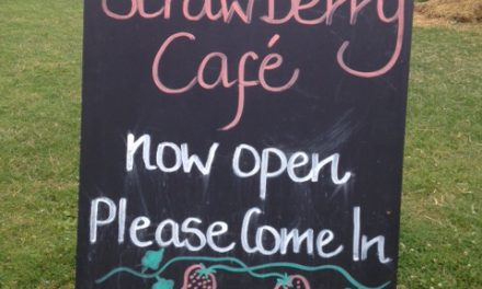 GO WILD – The Wild Strawberry Cafe at Peterley Manor Farm