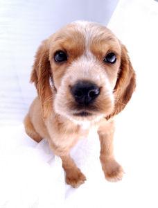 Wheelhouse dog