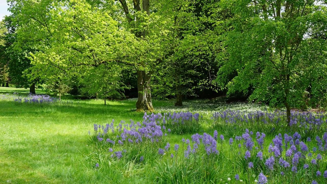 Woodlandwithflowers
