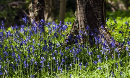 BEST PLACES TO SEE BLUEBELLS AND TOP TIPS FOR PHOTOGRAPHING THEM