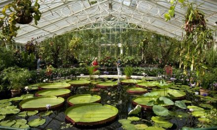 KIDS GO FREE TO KEW GARDENS THIS SUMMER