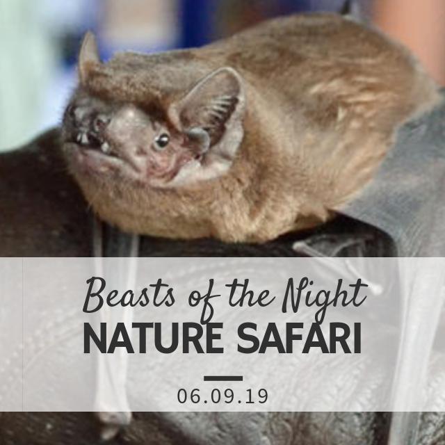 'Beasts of the Night' Family Nature Safari