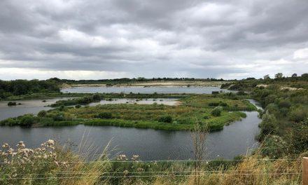 WALK: COLLEGE LAKE NATURE RESERVE