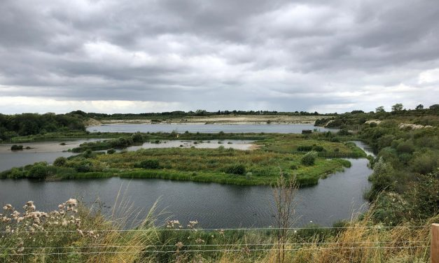 WALK: COLLEGE LAKE NATURE RESERVE