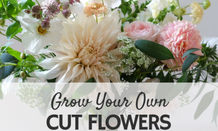 Grow Your Own Cut Flowers Workshop