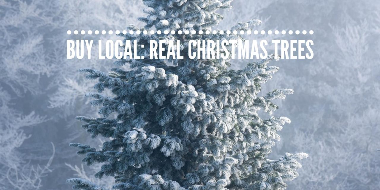BUY LOCAL: REAL CHRISTMAS TREES