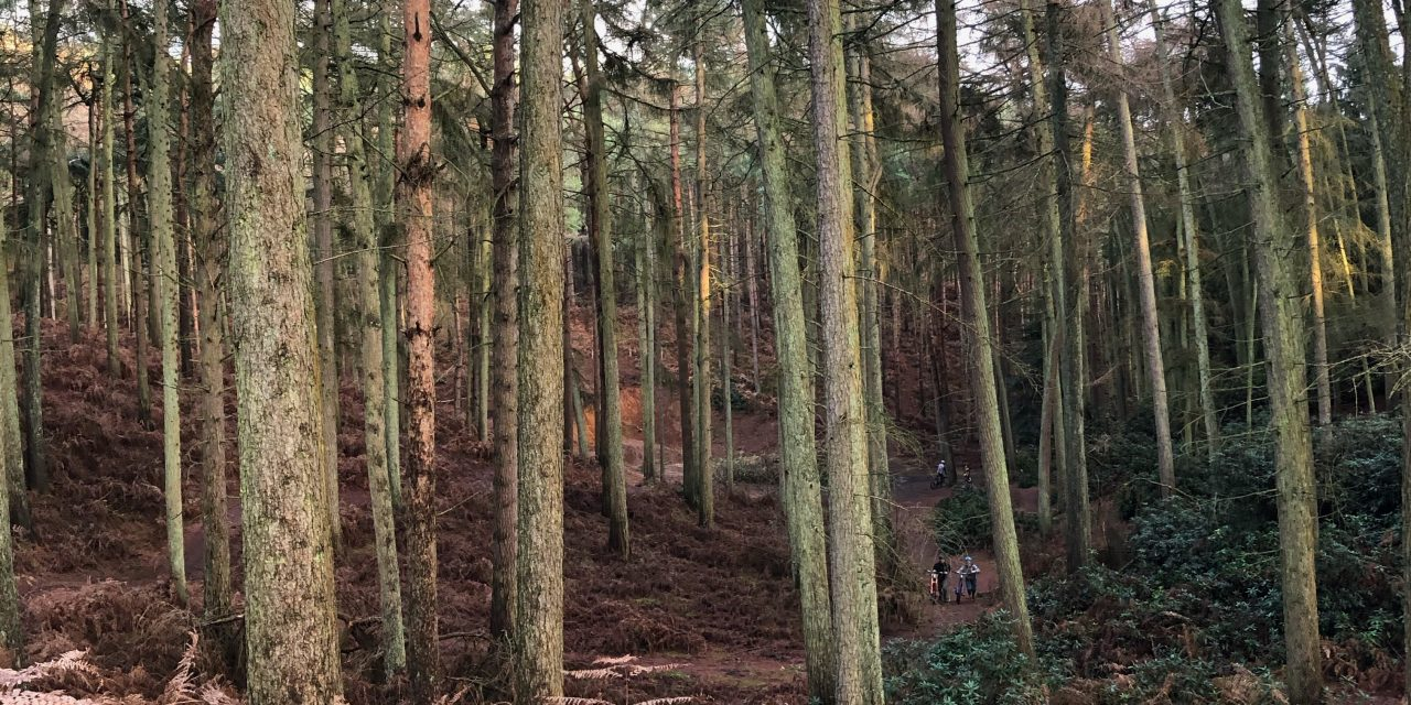 DAY TRIP: RUSHMERE COUNTRY PARK