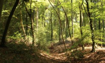 Chilterns Walking Festival – BOOKINGS ARE LIVE